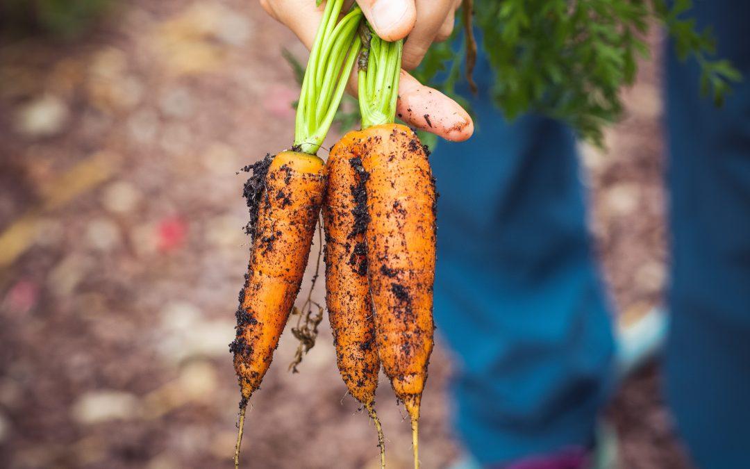 Over Duurzame landbouw, bio en csa door Tim Meys